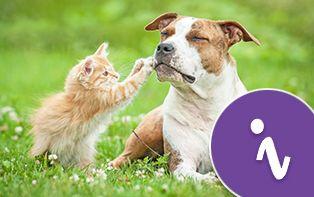 4 octobre est la Journée mondiale des animaux! Temps de gâter nos amis à quatre pattes!