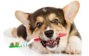 Votre chien et sa dentition: des friandes au dentifrice pour chiens !