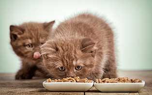 Les conseils de votre pharmacien en ligne pour la bonne nourriture pour votre chat