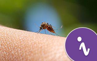 Un été bien protégé contre les moustiques!
