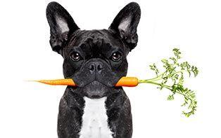 Jij vegetariër, dus je hond of kat ook? Je online apotheker legt uit