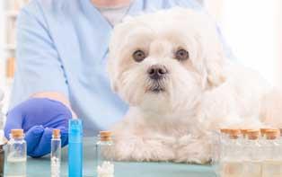 Conseils de votre pharmacien en ligne pour l'homéopathie pour les animaux