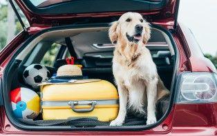 Nos conseils pour partir en vacances avec votre animal de compagnie