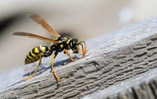 De tips van je online apotheker tegen insecten en hun steken