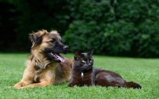 Tips om je hond of je kat te beschermen tegen vlooien en teken