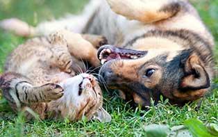 Laver et hygiène : protégez la fourrure de votre animal de compagnie !