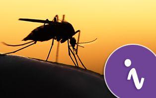 Gewapend tegen muggen met DEET!
