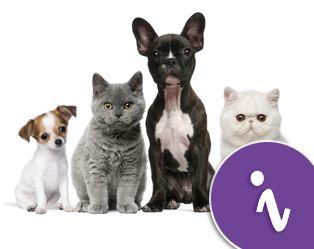 Stress bij honden en katten